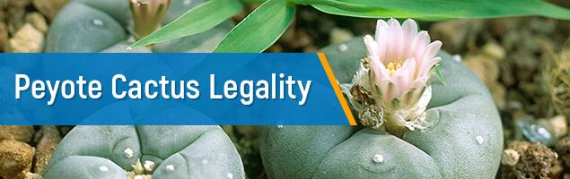Peyote Cactus Legality