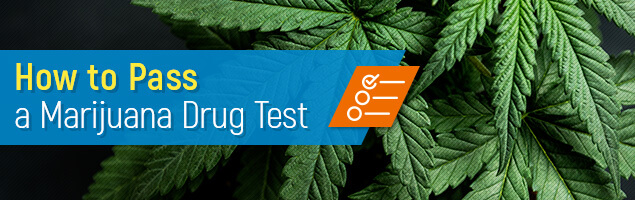 How to Pass a Marijuana Drug Test