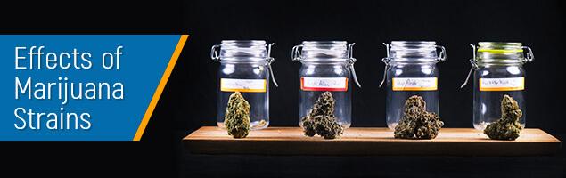 types of marijuana sativa