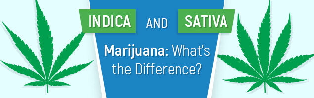 Indica and Sativa Marijuana - What's the Difference?