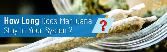 How Long Marijuana Stays in Your System?