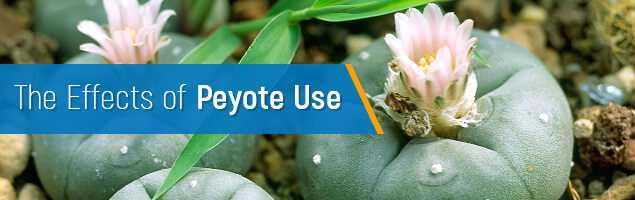 The Effects of Peyote Use