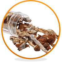Shrooms The Long Term Side Effects Of Mushrooms Addiction