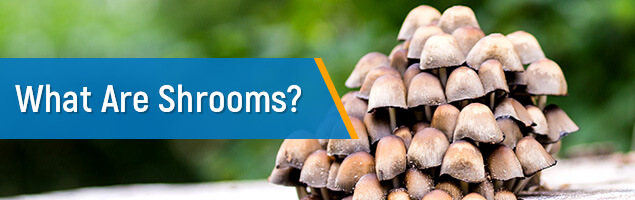 What Are Shrooms?