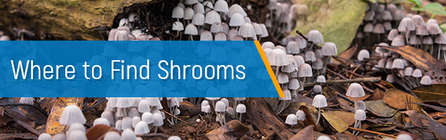 Where to Find Shrooms