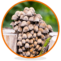 Shrooms - Where to Find Them and How to Store Them