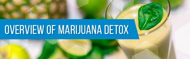 Overview Of Marijuana Detox