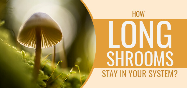 How Long Shrooms Stay In Your System Blood Urine
