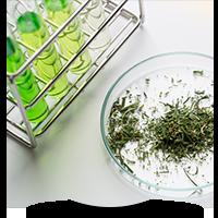 Spice Laboratory