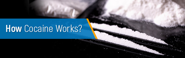 How does cocaine work?