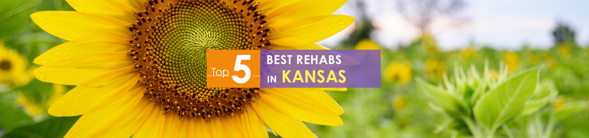 sunflower background and top 5 rehabs in Kansas caption