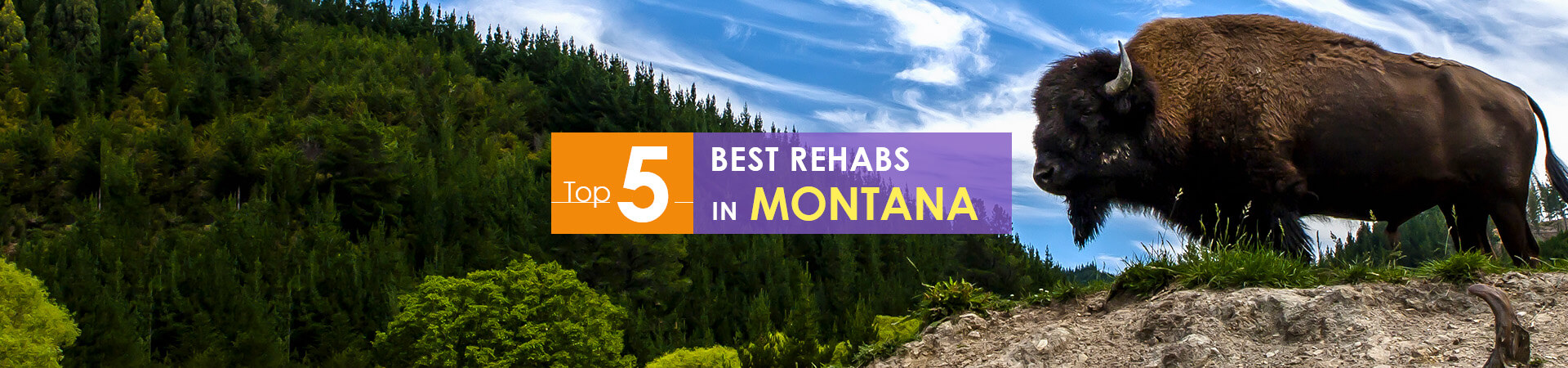 buffalo bison and top 5 rehabs in Montanacaption