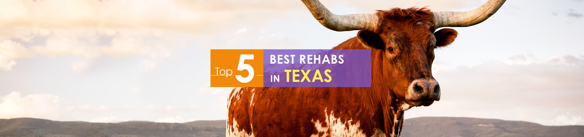 Texas longhorn and top 5 rehabs caption