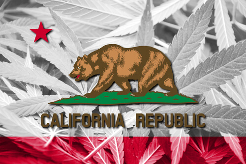 California state flag and bear on the background made of marijuana leaves