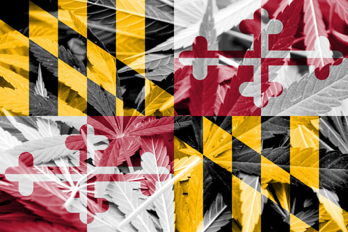 maryland state flag with cannabis background
