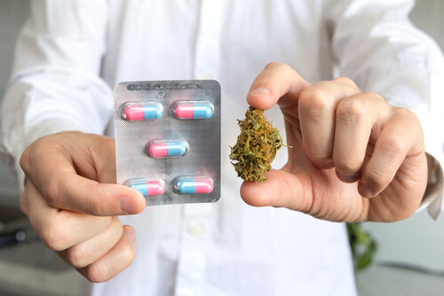 Doctor hand holding bud of medical cannabis and pills