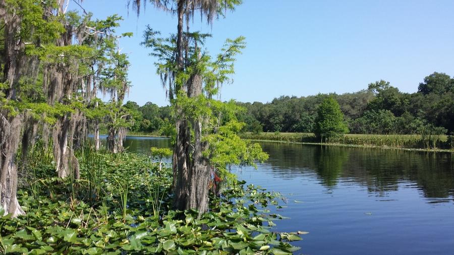 Ocklawaha River, Florida