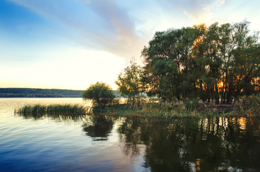 beautiful lake with bulrush and trees