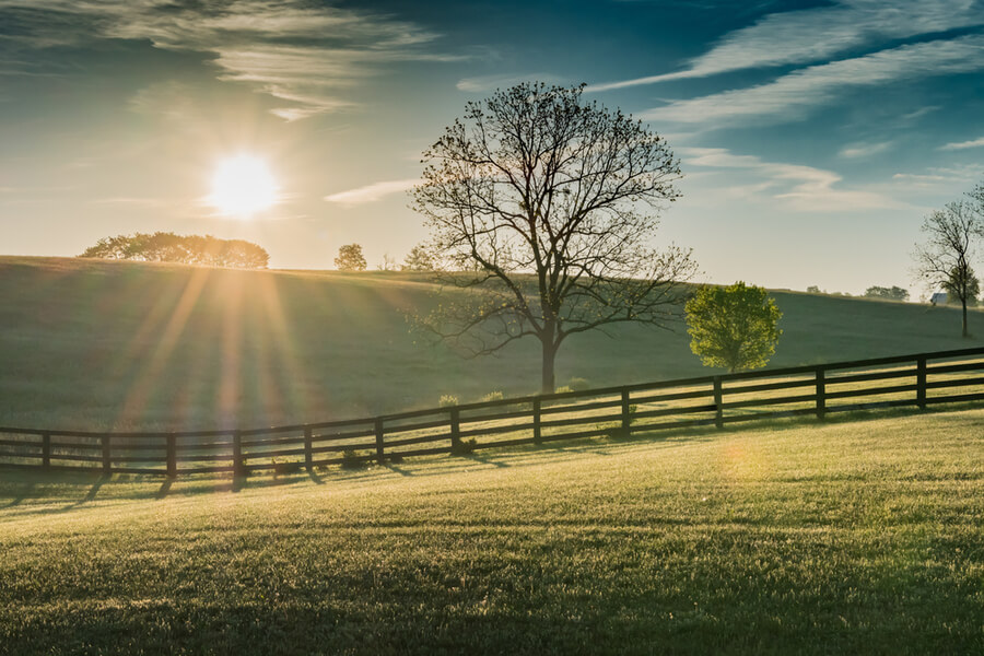 Kentucky Field at Dawn