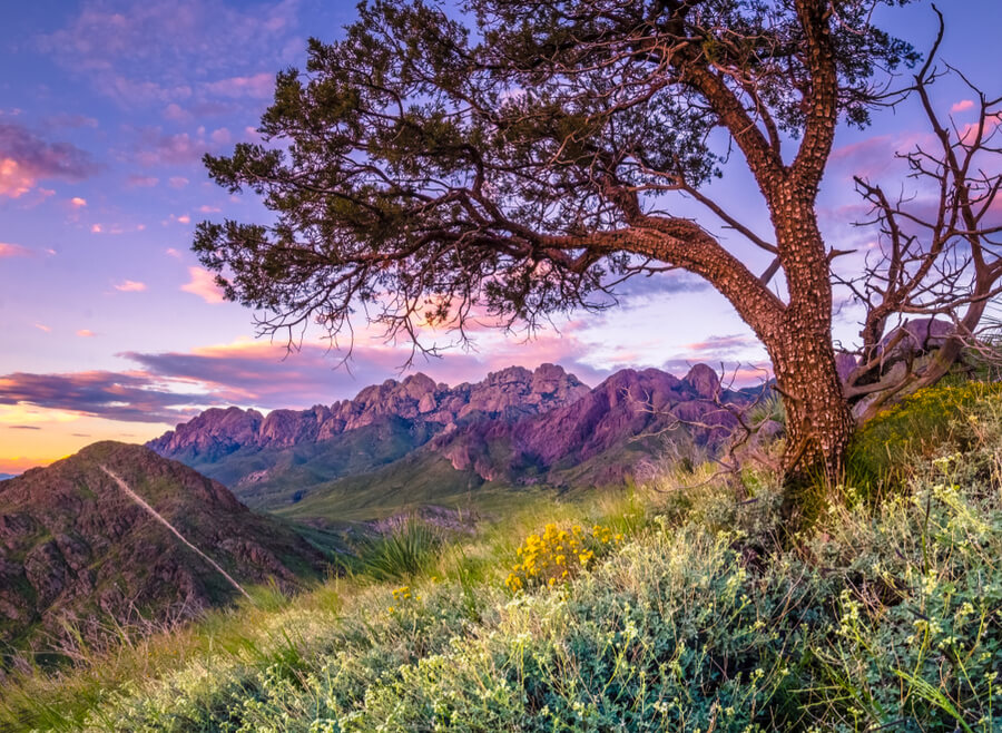 Las Cruces New Mexico