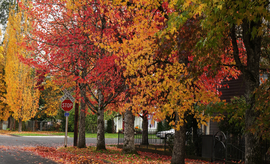 Small Town Autumn
