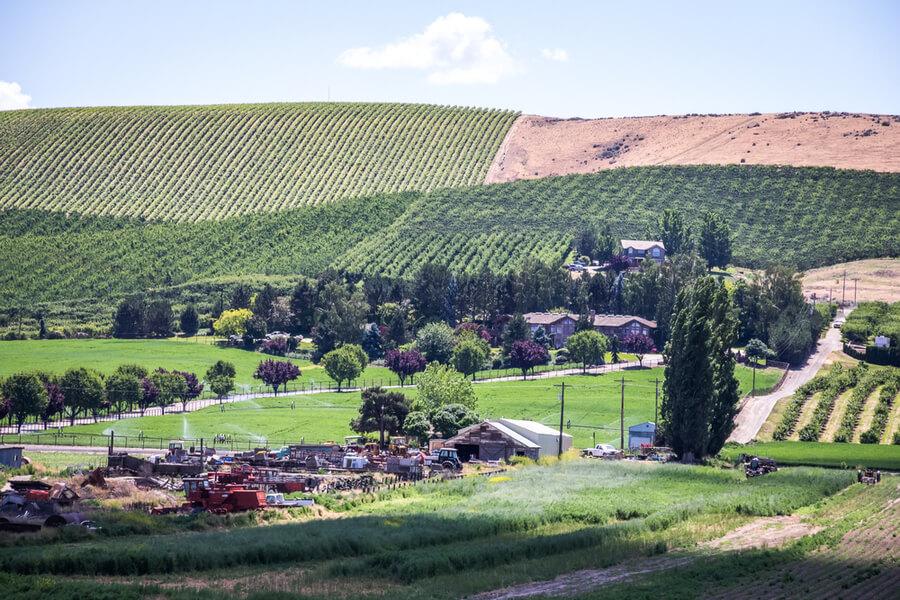 Vineyard near Yakima, Washington