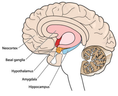 brain areas affected by weed