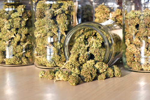 dried marijuana buds in a jar