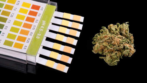 marijuana bud and ph detox stripes
