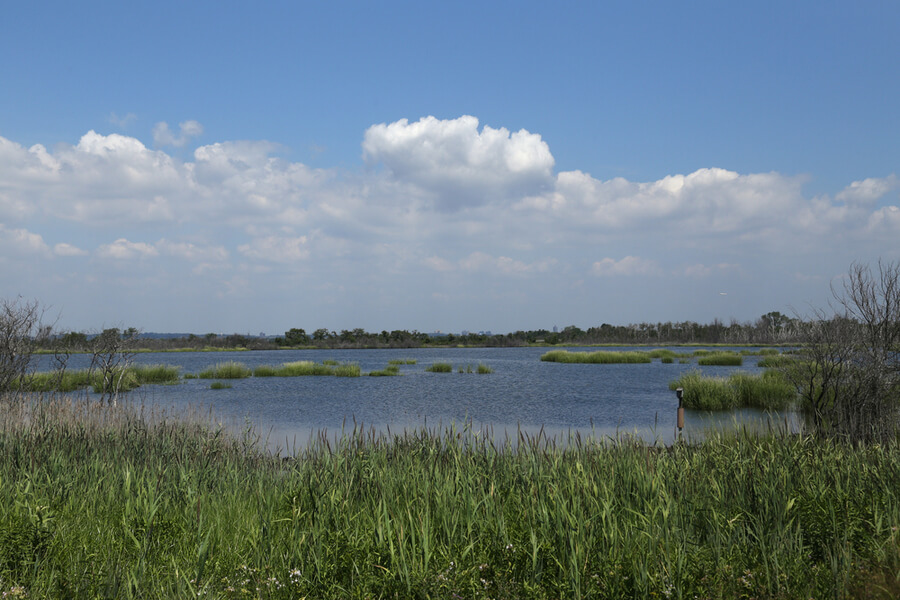 Jamaica Bay National Wildlife Refuge