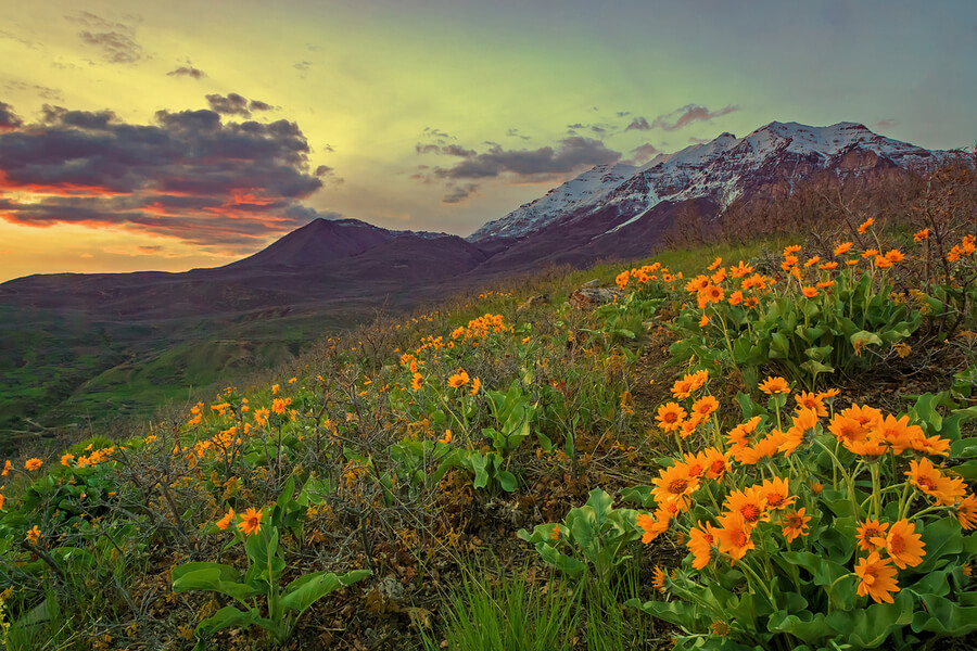 Spring sunset with yellow wildflowers in rural Utah, USA