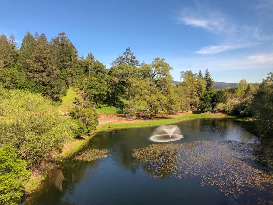 lake and forest in Calistoga, Napa Valley
