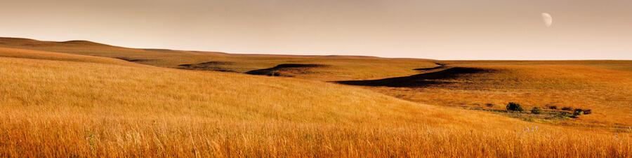 Kansas Tallgrass Prairie