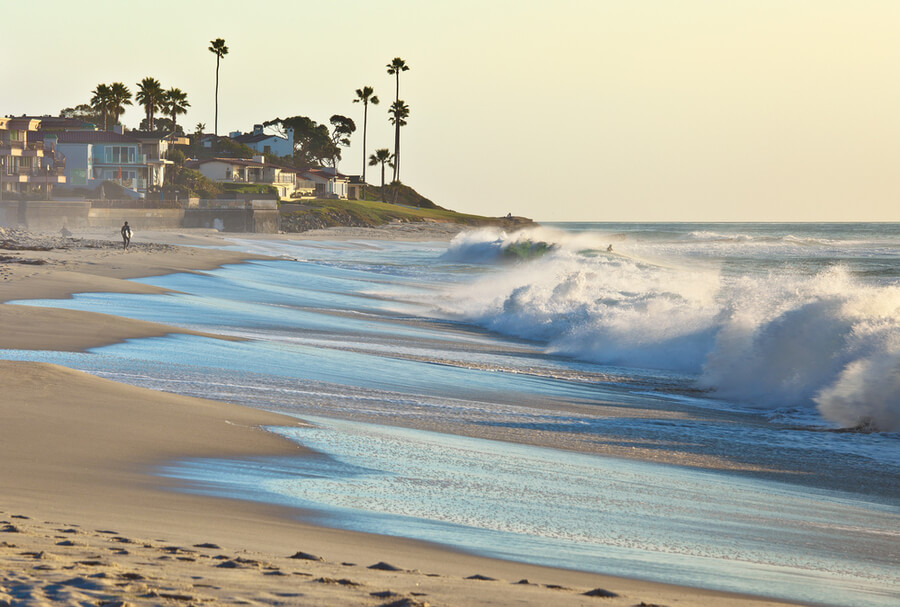 Palm Trees San Diego, California