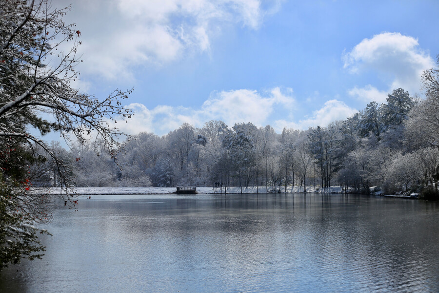 Snow Covered Trees Around a Lake
