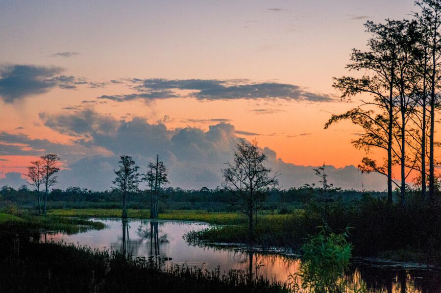 cypress trees in Louisiana
