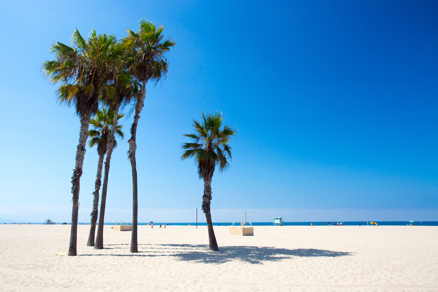 palm trees in Santa Monica, California, USA