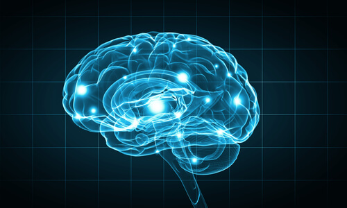 human brain processes