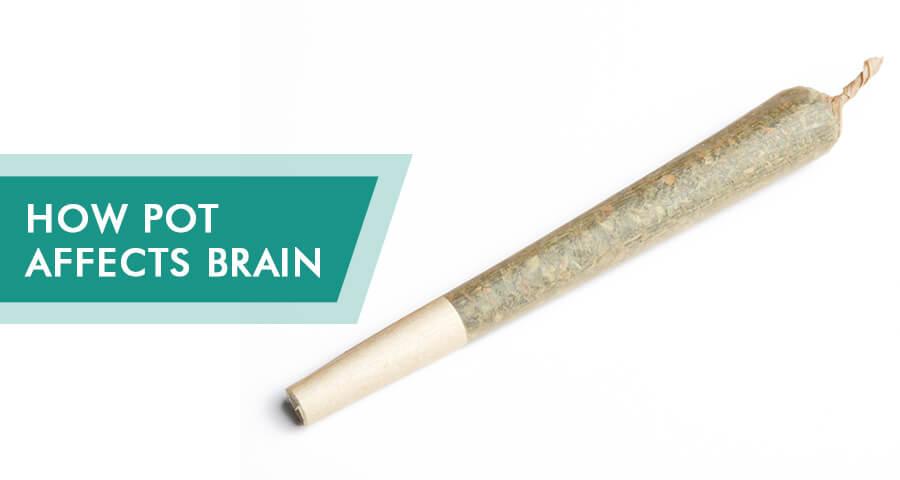 marijuana effects on brain