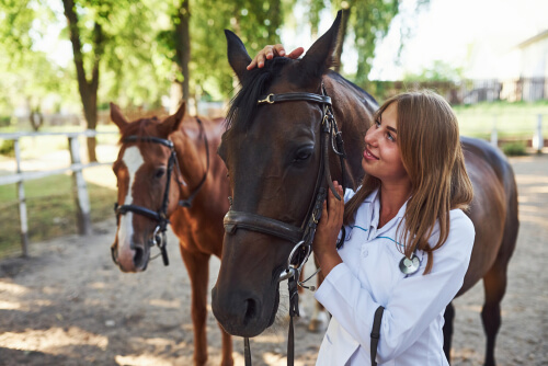 Therapist invites to enroll in Equine-Assisted Therapy