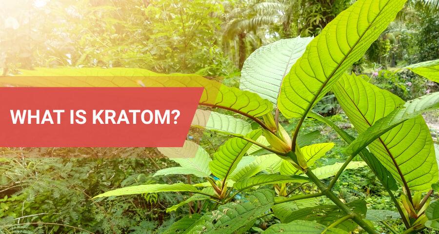 kratom abuse and addiction