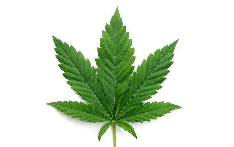 Indica plant.