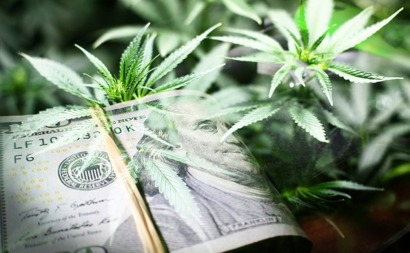 Cannabis plant and money.