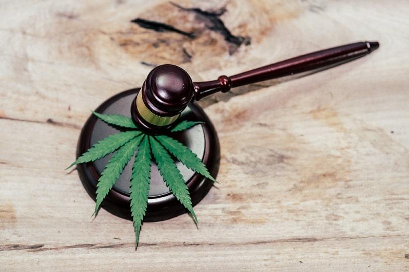 Marijuana leaves and judging mallets.