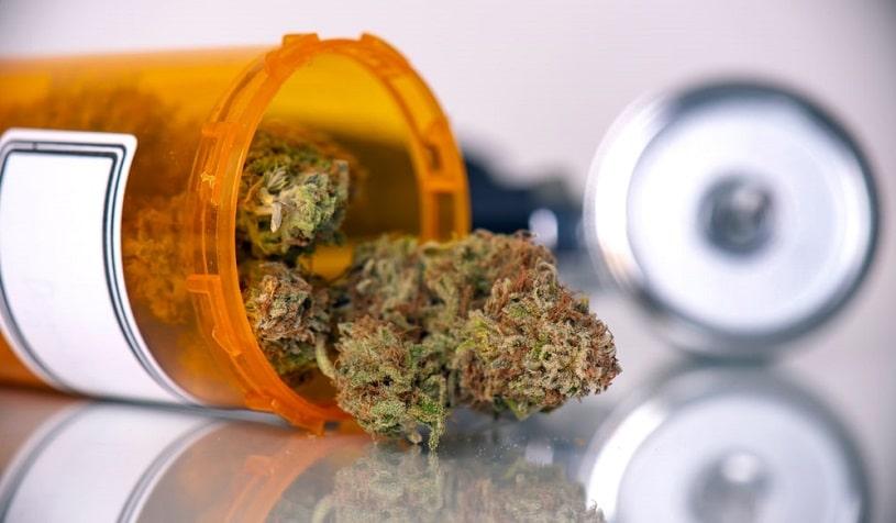 Medical marijuana with dry buds.