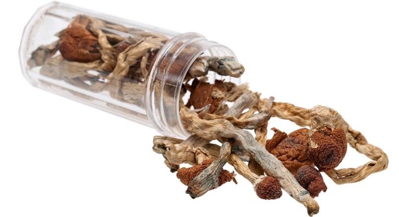 A jar of psilocybin mushrooms.