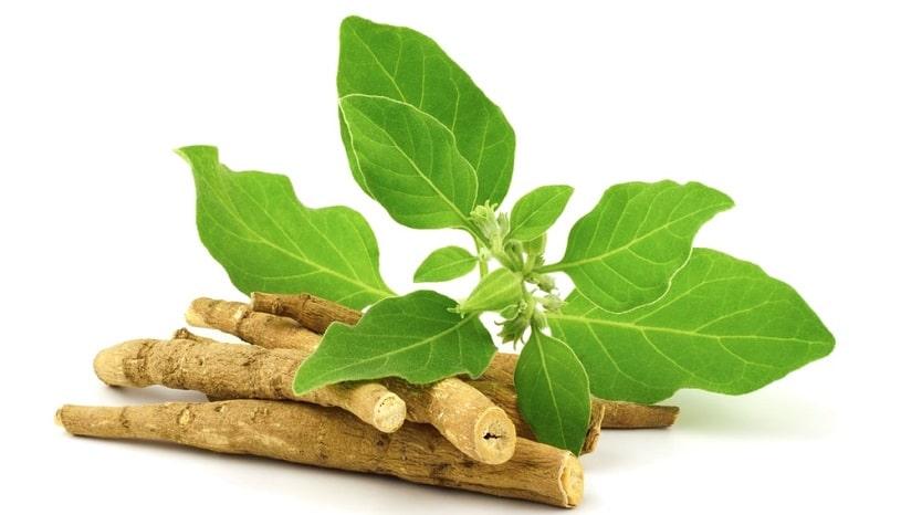 Ashwagandha Dry Root.